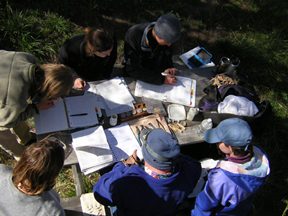 2005 banding crew at work (72ppi 4x)