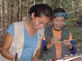 Diana Velasco and Ana Maria Gonzalez Banding interns banding 2006 (72ppi 4x)