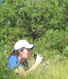 SMR KIWA nest searching cropped (72ppi 4x)