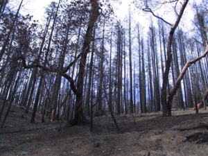Landscape after the Quartz fire (c) KBO archives