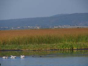 Klamath Marsh in Summer. (c) KBO 2016
