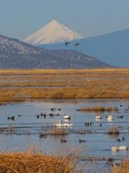 Lower Klamath National Wildlife Refuge (c) Jim Livaudais 2017